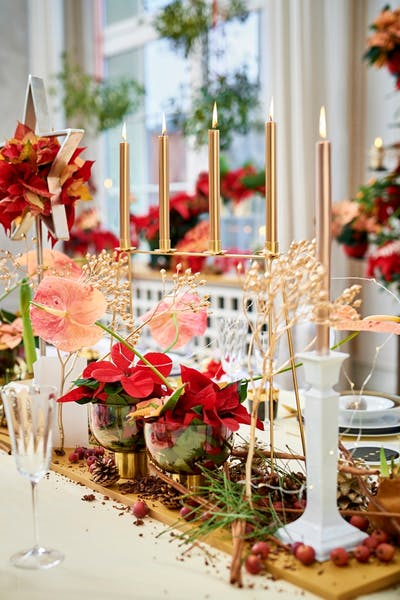 Be an Instagram star – learn how to stage the ultimate poinsettia image!