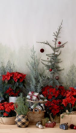 From vintage style to contemporary chic, there's a poinsettia to suit every taste imaginable