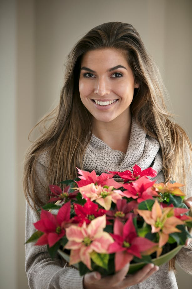 Quick gift ideas with poinsettias